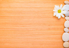 Flower chamomile and pebbles  frame Stock Image
