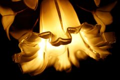 Flower chandelier royalty free stock images