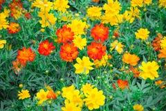 Flower in chiangmai Thailand Stock Photos