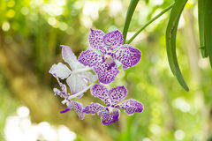 Flower in chiangmai Thailand Stock Images