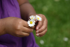 Flower child. Close up of face of child hand picking up a a daisy flower in the grass stock images