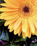 Flower Child Summer Lovin royalty free stock photo