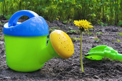 Flower and children's watering can Royalty Free Stock Photo