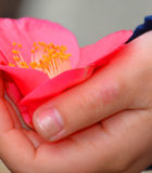 Flower in childs hand. Flower in the hand of a child Stock Photo
