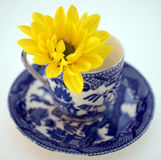 Flower in China teacup Stock Photos