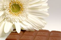 Flower and chocolate. Piece of chocolate and a white flower Stock Images