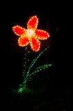 Flower christmas light Stock Images