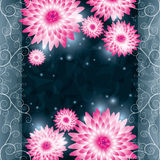 Flower chrysanthemum background. Invitation or gre Royalty Free Stock Photos