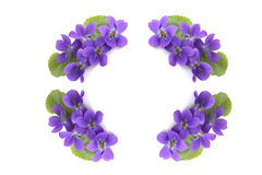 Flower circle. Circle from the violets against the white background Stock Photos