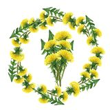 Flower circle. Set of watercolor dandelions. Illustration on white. Background royalty free stock photo
