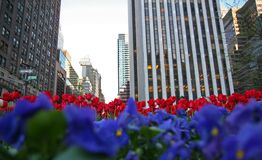 Flower in the city. Flowers in the city- Manhattan Stock Photos