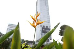 Flower in the city. Citylife KLCC park KualaLumpur nature yellow garden Royalty Free Stock Photo