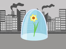 Flower in the city. Flower under a glass cover on the grey background of the city Stock Photography