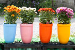 Flower clay pot Royalty Free Stock Image