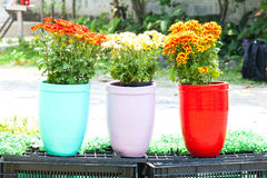 Flower clay pot Stock Image