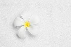Flower on cleaning towel texture color white. Good health Stock Images