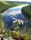 A flower on a cliff. A lonely flower on a cliff above the river stock photos