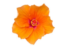 Flower with clipping part Royalty Free Stock Image