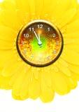 Flower clock Stock Image