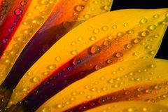 Flower close up. Flower with water droplets close-up Royalty Free Stock Photos