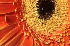 Flower close-up Stock Photos