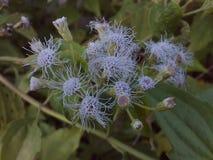 Flower close up background photo royalty free stock image