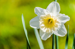 Flower close-up Stock Photo