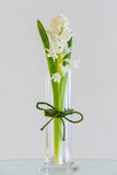 Flower Stock Image