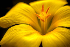 Flower. A close up of a flower in the morning Royalty Free Stock Photos