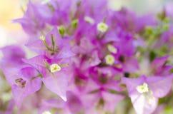 Flower. Close up of purple flower Stock Photo