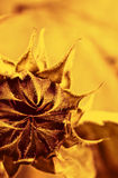 Flower close-up shot stock images