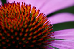 Flower. A close up shot of flower Stock Photo