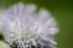Flower close up shot Stock Photos