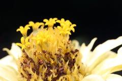 Flower close up spring season Stock Photography