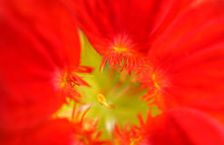 Flower closeup Stock Photos