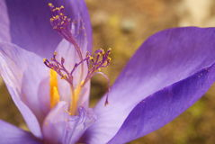 Flower closeup Stock Images