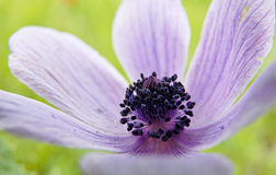 Flower closeup Stock Image