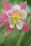 Flower closeup. Closeup picture of flowers in a french garden royalty free stock photo