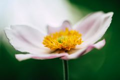 Flower Closeup royalty free stock images