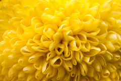 Flower Closeup Royalty Free Stock Photos