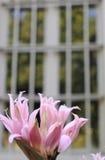 Flower closeup Stock Photo