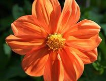 Flower closeups. Flower head orange colours nature's beautiful stock image