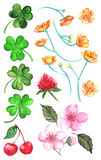 Flower clover cherry berry buttercup set clip art  vector Royalty Free Stock Image