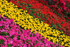 Flower cluster in different colors Stock Image
