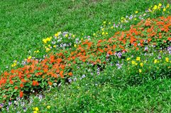 Flower cluster and meadow. Flower cluster in red and white, yellow  across green meadow. appears as strip shape, means colorful, prosperous and flourishing Stock Photo