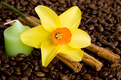 Flower, coffe, candle, cinnamon ... Stock Photos