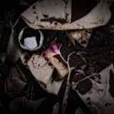 A Flower and Coffee Filters on a Compost Heap. /Artistically alienated to create a grungy somber atmosphere Royalty Free Stock Photos
