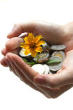 Flower and coins in hand Royalty Free Stock Image