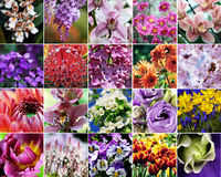 Flower collage. Flower macro collage set collection Stock Photography