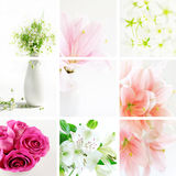 Flower collage. Collage of beautiful flowers in fresh colors royalty free stock image